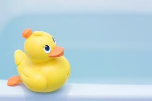 バスルームに黄色のアヒルの玩具の写真素材 [FYI00381428]