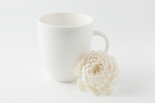 白背景に白色のコップと造花の写真素材 [FYI00381429]
