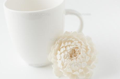 白背景に白色のコップと造花の写真素材 [FYI00381432]