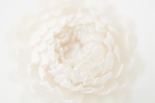白色の造花のアップの写真素材 [FYI00381433]