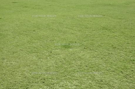 緑色の芝生の素材 [FYI00381939]