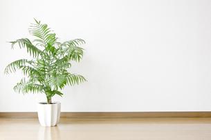 白い壁と床と観葉植物の写真素材 [FYI00381974]