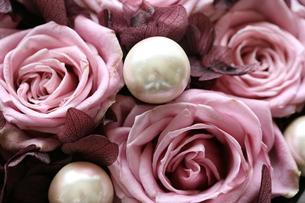 バラ ブルーミルフィーユ&パールの写真素材 [FYI00382234]