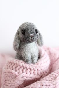 かくれんぼウサギ 2011干支の写真素材 [FYI00382272]