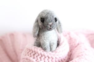干支ウサギかくれんぼの写真素材 [FYI00382273]