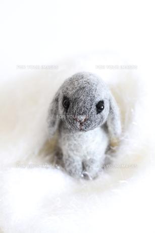干支ウサギ白い世界の写真素材 [FYI00382290]