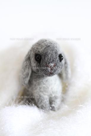 干支ウサギ白い世界の写真素材 [FYI00382297]