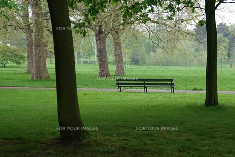 ロンドン、リージェントパークの芝生とベンチの素材 [FYI00382314]