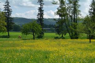 バーゼル郊外の春の風景(黄色い花)の素材 [FYI00382318]