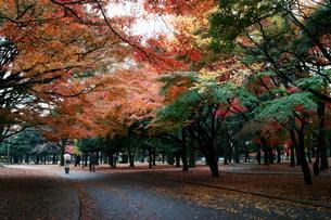 代々木公園の色とりどりの紅葉の素材 [FYI00382323]