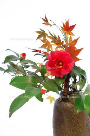 花瓶に生けたツバキとモミジの素材 [FYI00382333]
