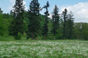 バーゼル郊外の春の風景(白い花)の素材 [FYI00382338]