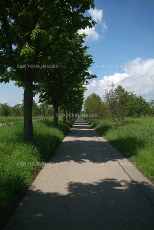 リズミカルな並木の影の落ちた歩道(タテ)の素材 [FYI00382347]