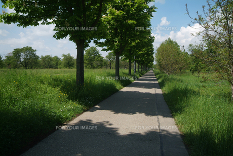 リズミカルな並木の影の落ちた歩道(ヨコ)の素材 [FYI00382348]