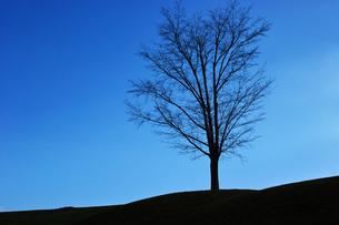 冬枯れの木の素材 [FYI00382386]