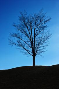 冬枯れの木の素材 [FYI00382404]