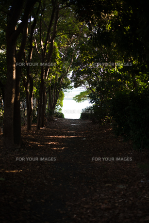 緑のトンネルの写真素材 [FYI00382443]