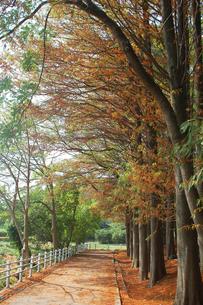 枯れ木の写真素材 [FYI00382598]