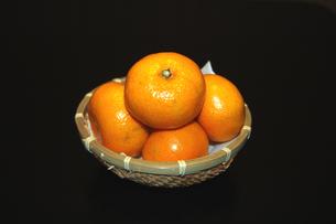 みかんの写真素材 [FYI00382692]