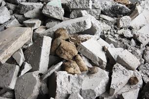 石の瓦礫の写真素材 [FYI00382788]