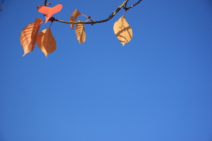 大阪城公園 紅葉の写真素材 [FYI00382871]