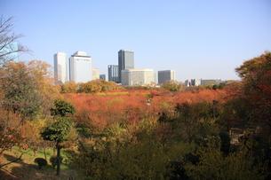 大阪城公園 ビジネスパークの写真素材 [FYI00382874]