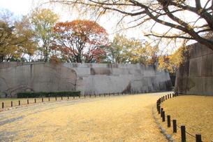 大阪城公園 いちょうの写真素材 [FYI00382880]