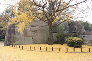大阪城公園 イチョウの写真素材 [FYI00382885]