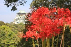 大阪城公園 ヒガン花の写真素材 [FYI00382899]