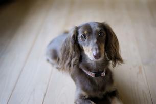 犬の穏やかな時間の素材 [FYI00383021]