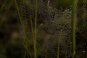 spider's beautiful trapの写真素材 [FYI00383027]