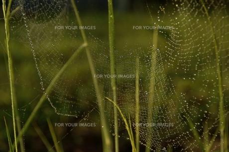 spider's jewelryの写真素材 [FYI00383039]