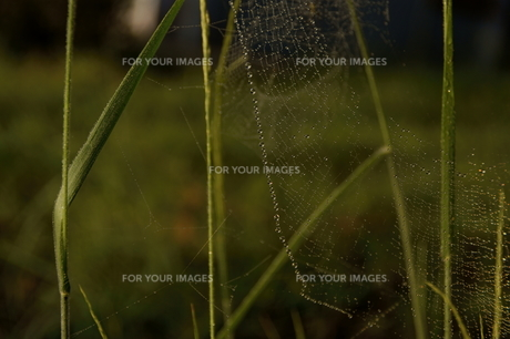 spider's chainの写真素材 [FYI00383046]