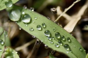 水の粒の素材 [FYI00383052]