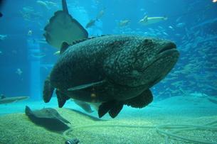 深海魚の写真素材 [FYI00383074]