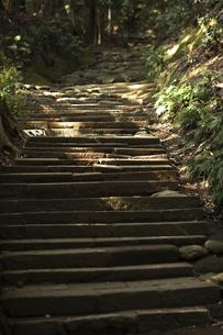 木漏れ日の石段の写真素材 [FYI00383233]