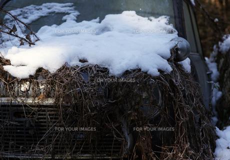 miniの雪の写真素材 [FYI00383284]