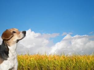 田舎の犬の写真素材 [FYI00383747]
