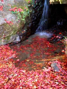 龍蔵寺 滝つぼに浮かぶ落ち葉の写真素材 [FYI00383779]