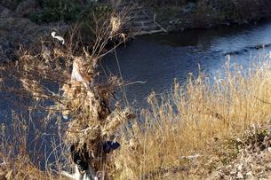 河川の枯れ木に残されたゴミの素材 [FYI00384620]