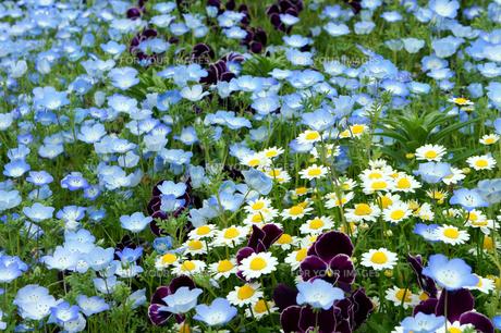 春の花畑の素材 [FYI00384737]