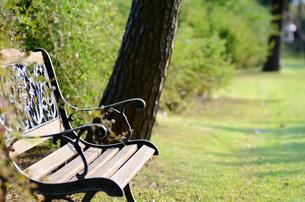 公園のベンチの素材 [FYI00385082]
