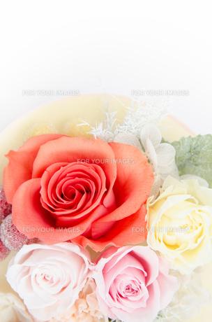 プリザーブドフラワー 薔薇の素材 [FYI00386339]