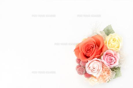 プリザーブドフラワー 薔薇の素材 [FYI00386341]