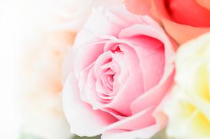 プリザーブドフラワー 薔薇の素材 [FYI00386343]