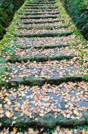 苔と落ち葉のある石の階段の素材 [FYI00386365]