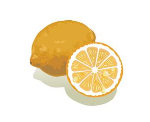 レモン (果物・イラスト)の写真素材 [FYI00387310]
