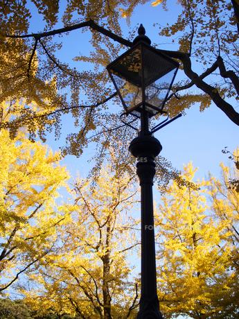 山下公園通りの街灯とイチョウの素材 [FYI00387325]
