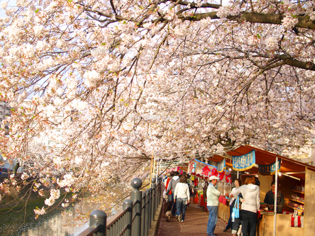 日本の花見の素材 [FYI00387329]