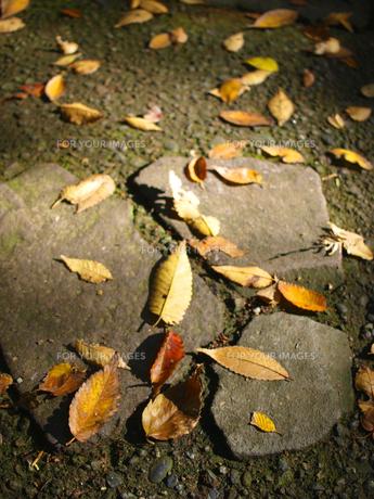 落ち葉と石畳の素材 [FYI00387343]